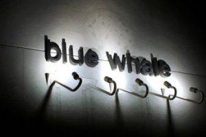 blue-whale_s345x230